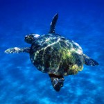 vacanze-lampedusa-tartaruga-marina