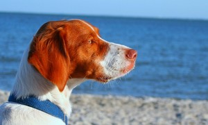 Spiagge-cani-isola-d'elba