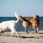 spiagge-cani-dove-andare