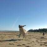 spiagge-che-accettano-animali